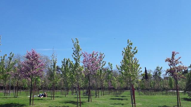 primavera madrid